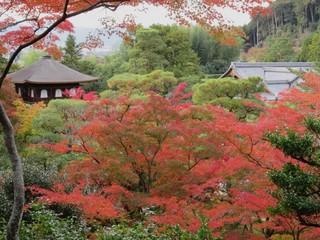 HerbstinKyoto2.JPG